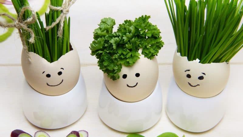 Plantes aromatiques : tout savoir pour les cultiver à l'intérieur