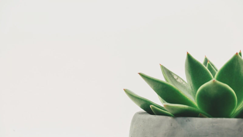 2 astuces pour faire pousser vos plantes en intérieur