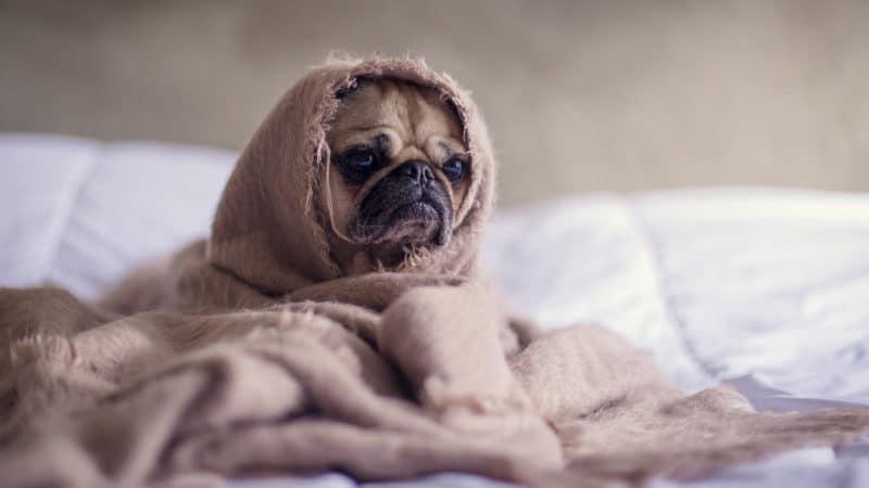 Comment rester au chaud cet hiver ?