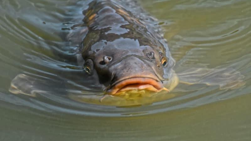 Choisissez les bons équipements pour pêcher la carpe