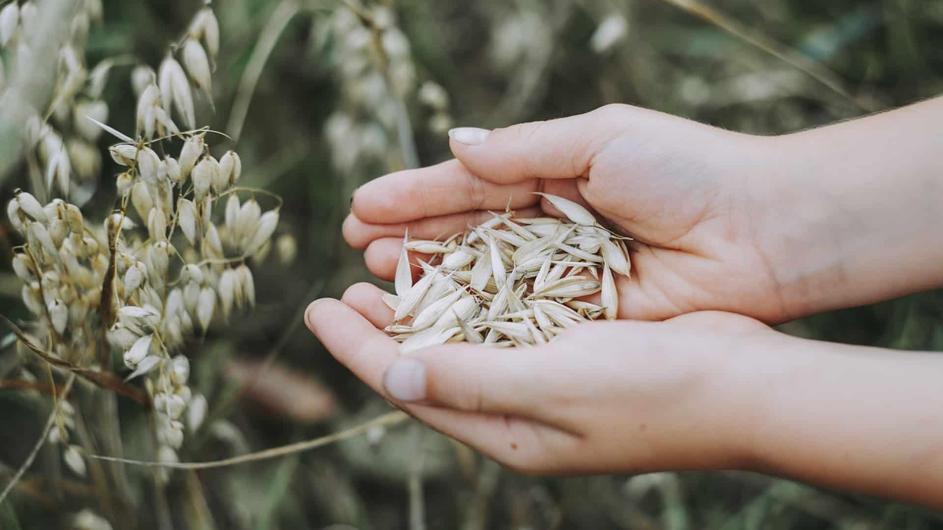 Céréales complètes : un véritable atout santé !